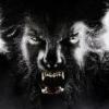WolfmanX